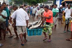 死的鲨鱼在鱼市- Beruwela,斯里兰卡上 库存图片