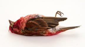 死的鸟 库存照片