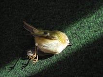 死的鸟 免版税库存图片