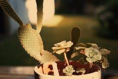 的仙人掌多汁植物 图库摄影