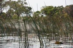 从水的水平的Okavango三角洲 库存图片