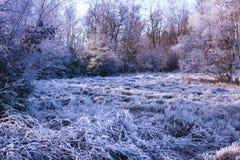 冻结的12月 免版税库存照片