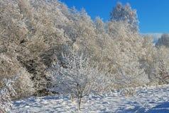 冻结的结构树村庄冬天 免版税图库摄影