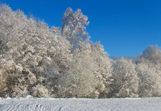 冻结的结构树村庄冬天 库存图片