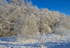 冻结的结构树村庄冬天 库存照片