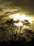 轻的结构树 库存照片