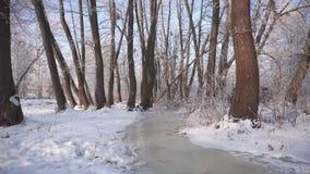 冻结的水流量在森林里 股票视频