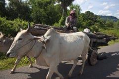 他的水牛推车的贫困者 库存照片