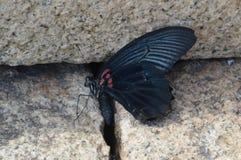 死的蝴蝶 免版税库存照片