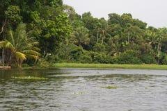 水的Allepey市 死水,米种植园,可可椰子芒果树 河横向 库存图片