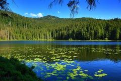 更总的Arbersee,巴法力亚漂泊森林,德国 免版税图库摄影