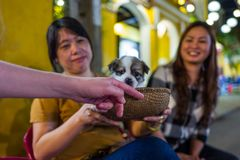 的Hoi,越南- 2018年4月19日:摄影师宠爱在会安市treets的逗人喜爱的小狗  免版税库存图片