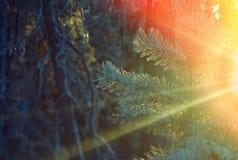 冻结的taiga前面 图库摄影
