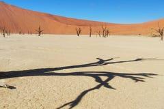 死的Vlei树和风景离开,纳米比亚 免版税库存图片