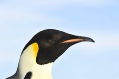 皇企鹅关闭 库存图片