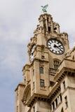 皇家大厦的肝脏 库存照片