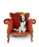皇家狗 库存图片