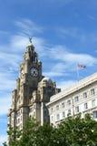 皇家肝脏大厦,利物浦,英国 库存照片