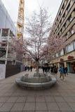 皇家街道Koenigstrasse -一条普遍的购物街道在历史的中心 斯图加特 库存图片
