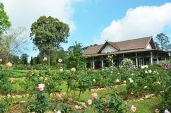 皇家bhubing的大庭院安排的玫瑰 免版税库存图片