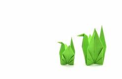 绿皮书鸟 免版税库存照片