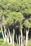 皮包骨头的树 免版税库存照片