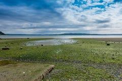 皮吉特湾处于低潮中 免版税库存图片
