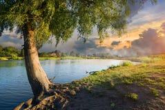 紫皮柳树和雾 免版税库存图片