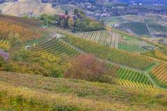 皮耶蒙特葡萄园, Langhe,意大利 库存图片