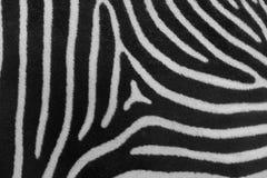 皮肤斑马 免版税库存图片