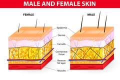 皮肤男性和女性 免版税库存照片