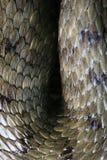 皮肤蛇纹理 免版税库存照片