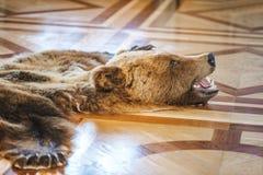 皮肤被杀死的熊 库存照片