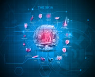 皮肤解剖学背景 向量例证