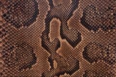 皮革蛇纹理 库存照片