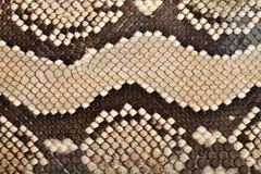 皮革蛇纹理 免版税库存照片
