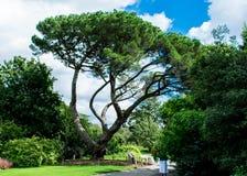 盆景喜欢树 库存照片
