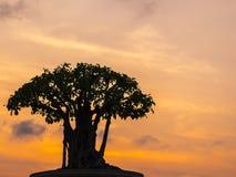 盆景在五颜六色的日落天空的树剪影 免版税库存照片