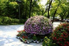 盆景在庭院里 免版税库存图片