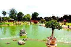 盆景在日本庭院湖 免版税库存图片