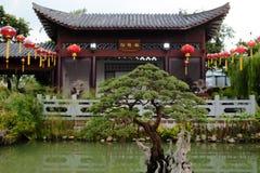 盆景树在中国庭院里 免版税库存照片