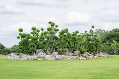 盆景树在庭院里 免版税库存照片
