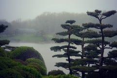 盆景树有雾的风景 库存图片