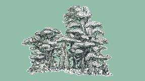 盆景树,画 免版税库存照片