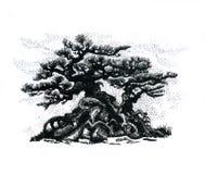 盆景树,画 图库摄影