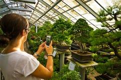 盆景温室在Walbrzych,波兰 免版税库存照片