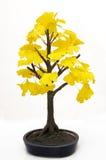 盆景结构树 库存图片