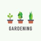 盆栽植物从事园艺的概念 库存照片