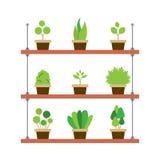 盆栽植物从事园艺的概念 图库摄影