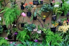盆的兰花垂悬从锻铁墙壁的, Longwood庭院, PA的美好的图象, 2017年 库存图片